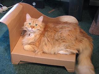 sofa de carton para gatos