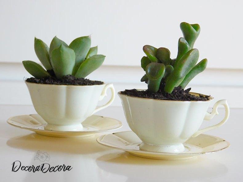 Tazas con plantas