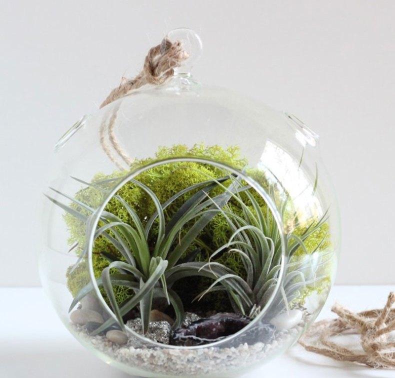 Plantas de aire para decorar