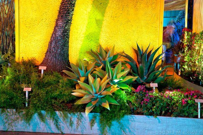 Jardines mexicanos 30 imgenes e ideas para inspirarse  ecoraIdeas