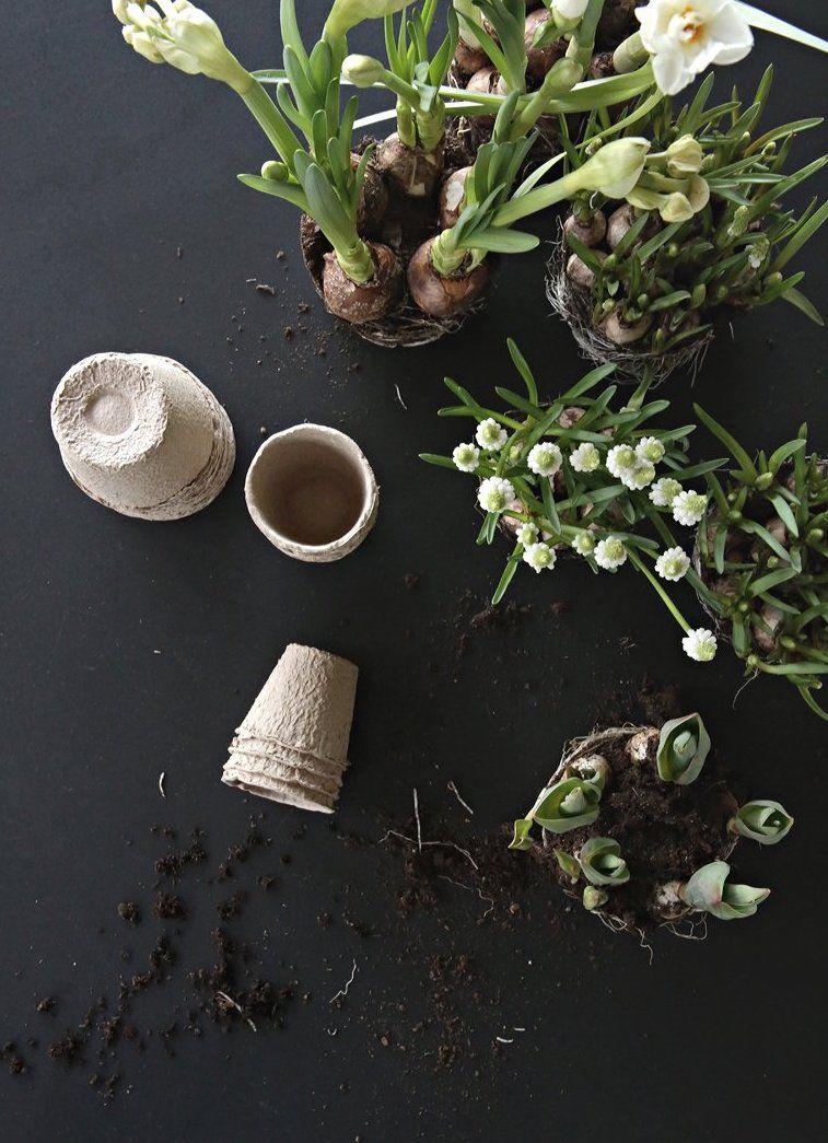 Spring flowers by Nina Holst