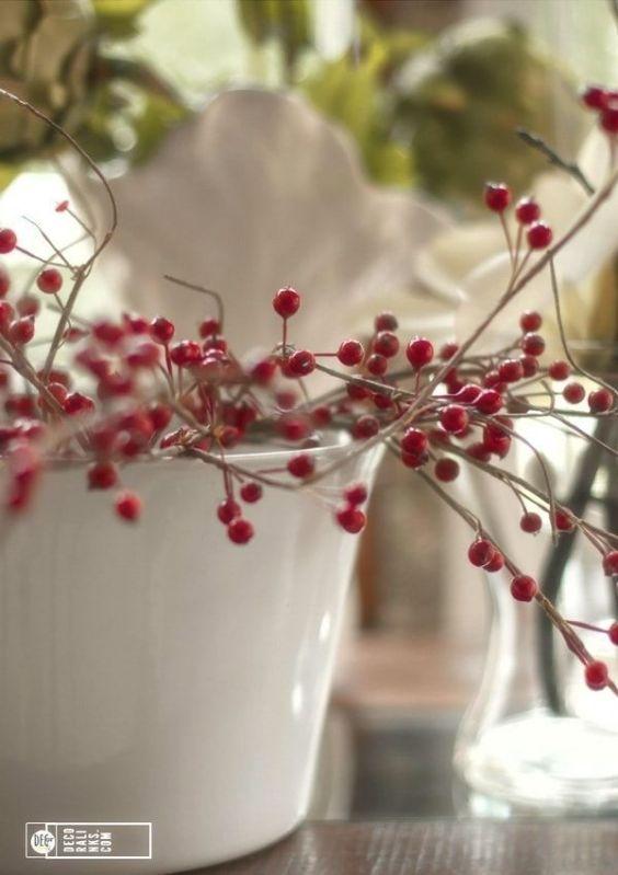 Plantas de navidad - bayas rojas