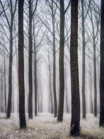 decoralinks   bosque - fotografia de @botikario