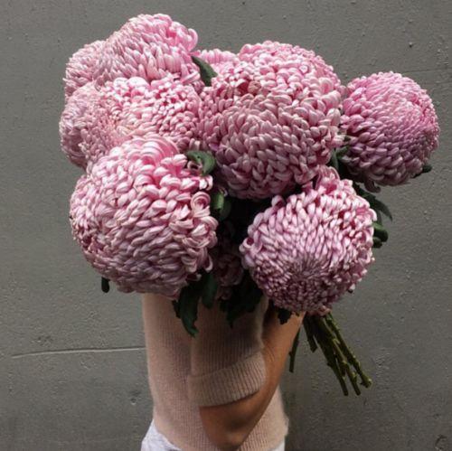 decoralinks | regala flores - crisantemo japones