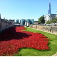 888.246 Amapolas de cerámica rodean la Torre de Londres para recordar a las víctimas de la I Guerra Mundial