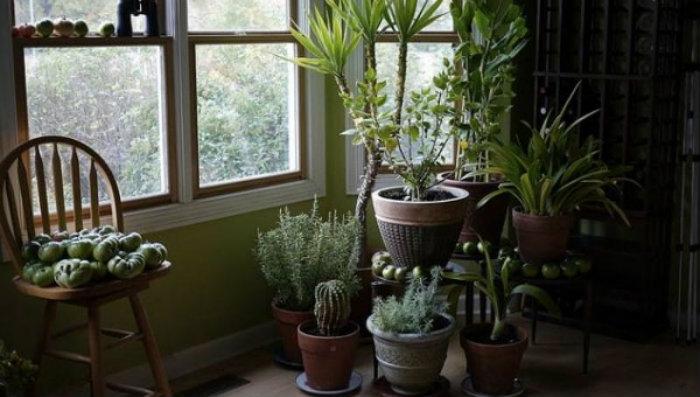 φυτα εξωτερικου και εσωτερικου χωρου κοντα στο παραθυρο