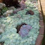 BEST SUCCULENT GARDEN DESIGN IDEAS 124