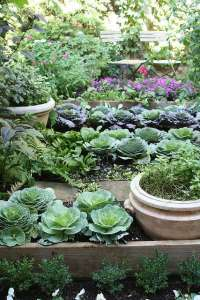 BEST SUCCULENT GARDEN DESIGN IDEAS 126