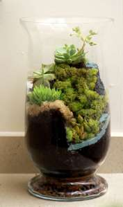 BEST SUCCULENT GARDEN DESIGN IDEAS 136