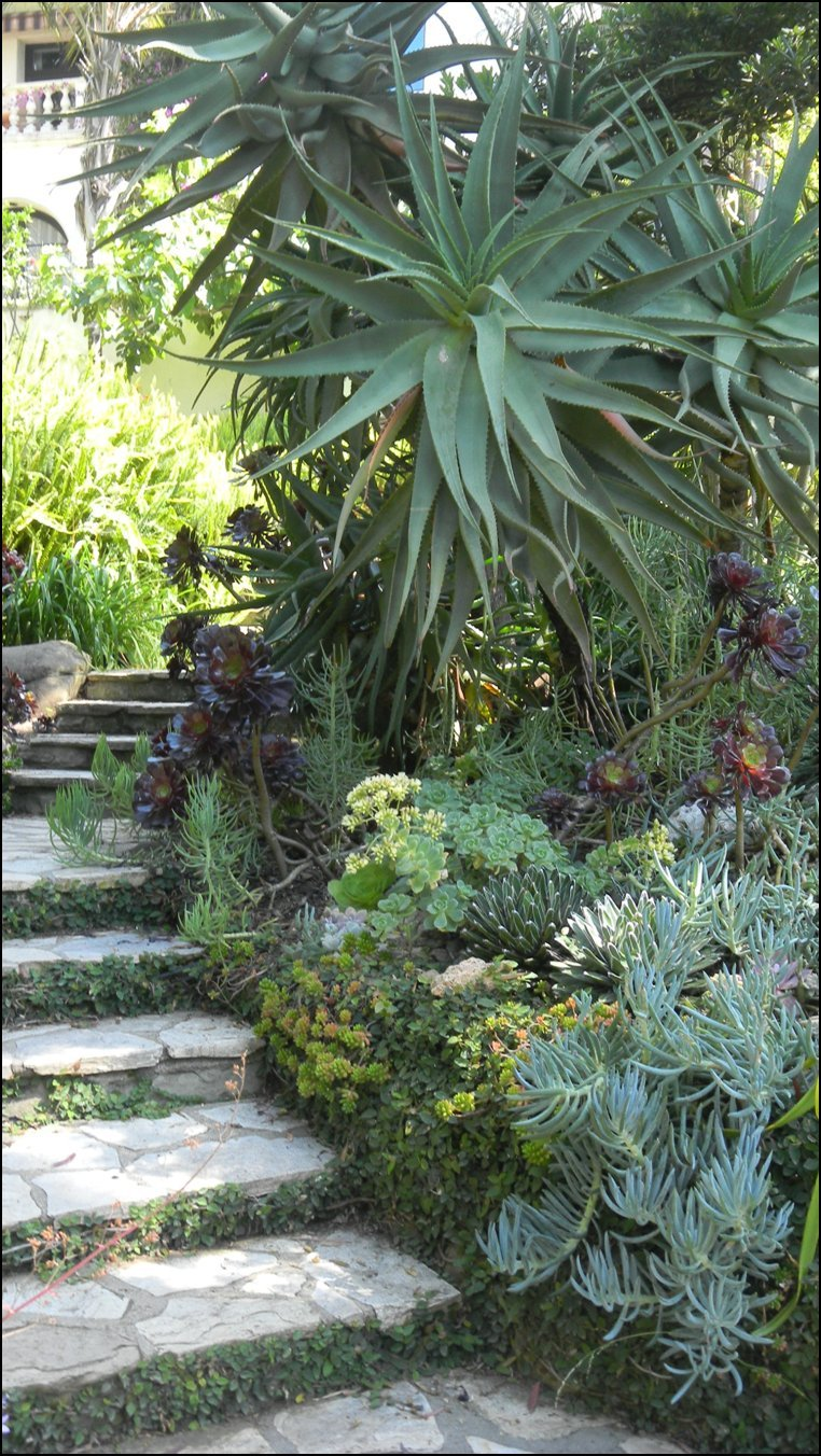 BEST SUCCULENT GARDEN DESIGN IDEAS 56