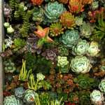 BEST SUCCULENT GARDEN DESIGN IDEAS 57