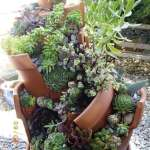 BEST SUCCULENT GARDEN DESIGN IDEAS 76