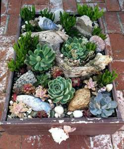 BEST SUCCULENT GARDEN DESIGN IDEAS 80