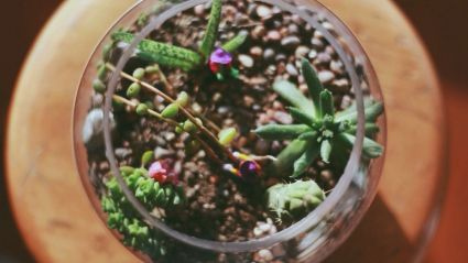 Magical And Best Plants DIY Fairy Garden Inspirations 56