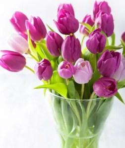 Tulips In Vase 31