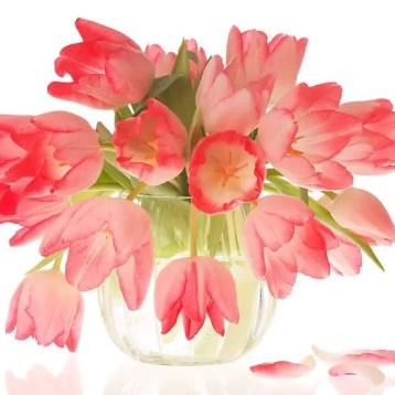 Tulips In Vase 43