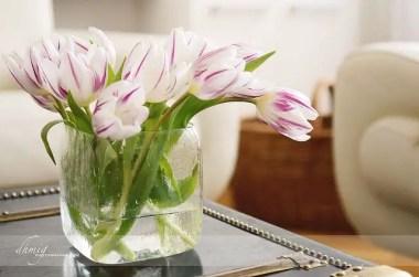 Tulips In Vase 50