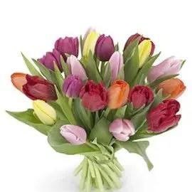 Tulips In Vase 54