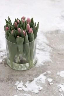 Tulips In Vase 66