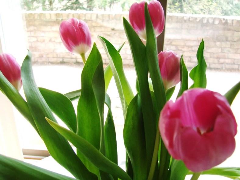 Tulips In Vase 70