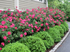 Flower Beds In Front Of House 111