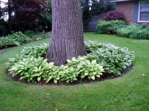 Flower Beds In Front Of House 133