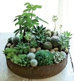 Indoor Plants 14