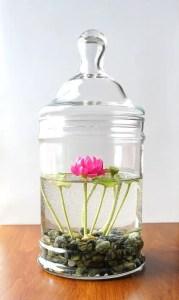 Indoor Plants 18