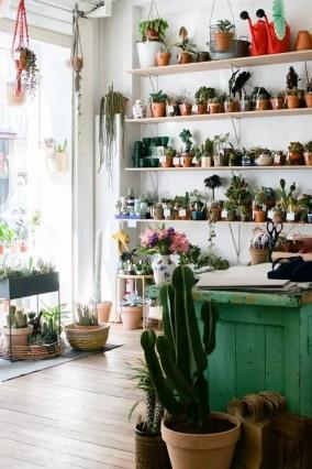 Indoor Plants 23