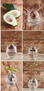 Indoor Plants 32