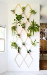 Indoor Plants 33
