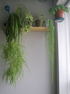 Indoor Plants 4