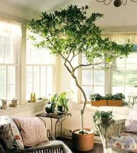 Indoor Plants 44