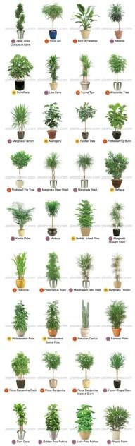 Indoor Plants 66