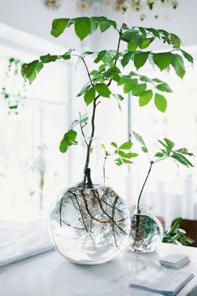 Indoor Plants 76