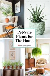 Indoor Plants 79