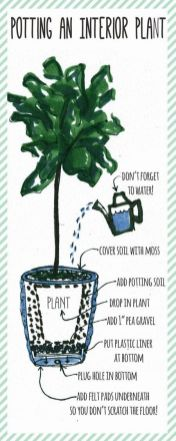 Indoor Plants 85
