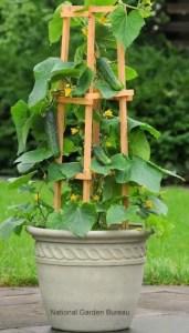 Container Gardening 12