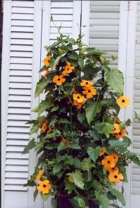 Container Gardening 51