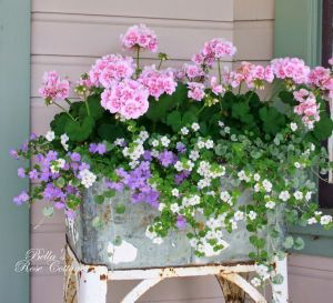 Container Gardening 55