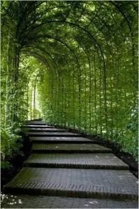 Outdoor Walkway 50