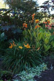 Daylily Garden 17