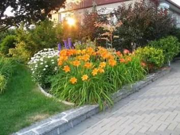 Daylily Garden 29