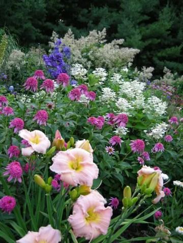 Daylily Garden 48