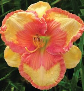 Daylily Garden 7