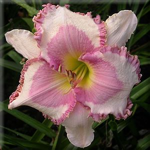 Daylily Garden 93
