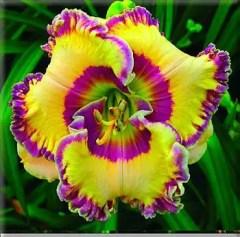 Daylily Garden 97