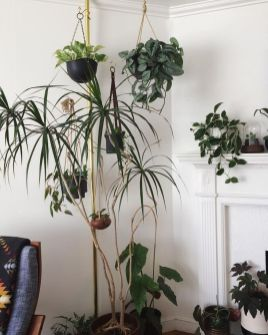 Indoor Plants 10