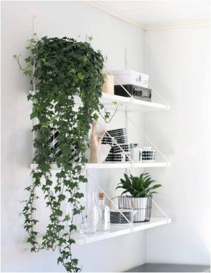 Indoor Plants 100