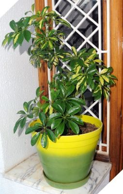 Indoor Plants 102